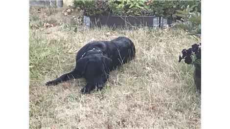 forex hovedbanegården københavn hundefrisør randers