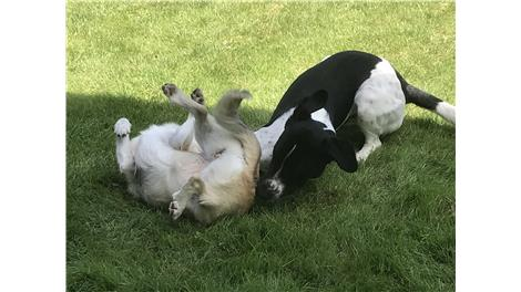 6d811f6bddd Hilsner fra hunde, katte, kaniner og smådyr med nye hjem - Dyreværnet