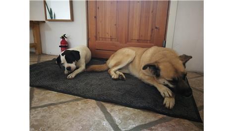 Hilsner fra hunde, katte, kaniner og smådyr med nye hjem