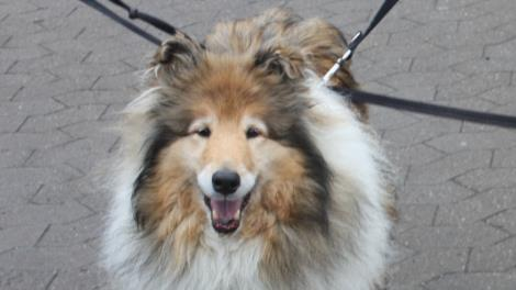 hunde adoption sjælland